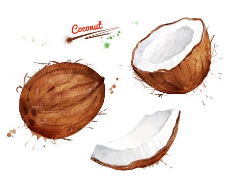 Watercolor illustration set of coconut