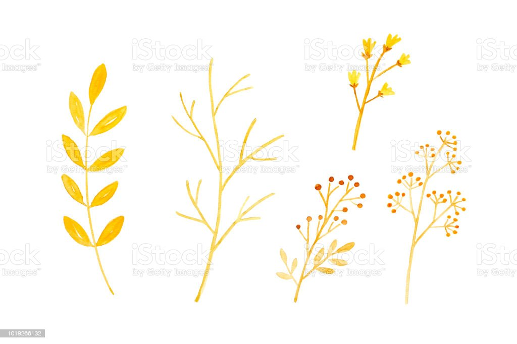 Watercolor illustration, Set of hand drawing fall, autumn flowers and leaves in watercolor style isolated on white background, invitation and greeting card art design background, banner vector art illustration