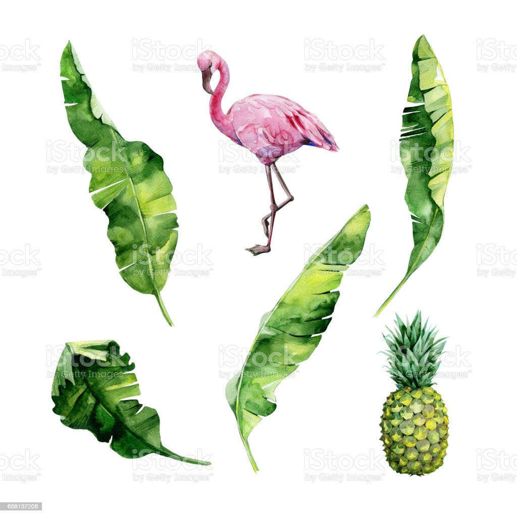 Watercolor illustration set of tropical leaves, dense jungle, flamingo bird and pineapple. royalty-free watercolor illustration set of tropical leaves dense jungle flamingo bird and pineapple stock vector art & more images of arts culture and entertainment