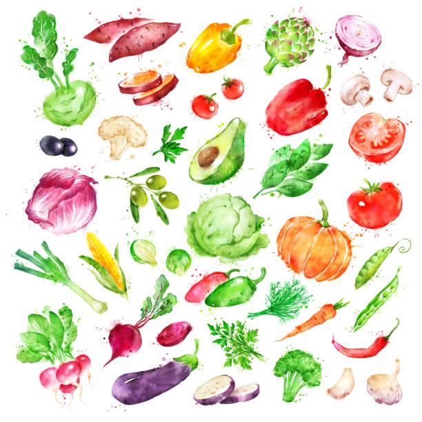 stockillustraties, clipart, cartoons en iconen met aquarel illustratie set van groenten - spruitjes