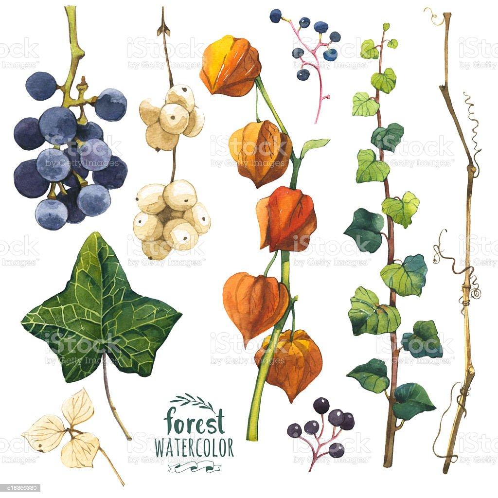 Acuarela ilustración con bifurcaciones, hojas y cerezas. - ilustración de arte vectorial