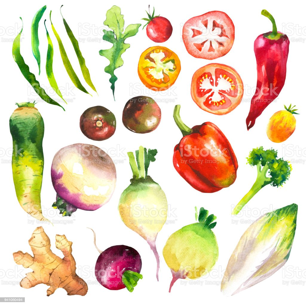 Watercolor illustration with farm grown illustrations. Vegetables set: tomatoes, peppers, turnips, chicory, pepper, arugula, ginger, broccoli. Fresh organic food vector art illustration