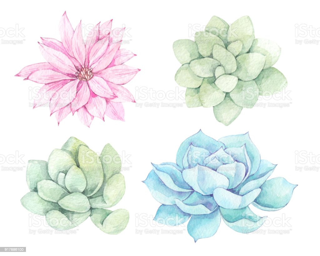 Watercolor illustrations - succulents clipart. Succulent and cactus collection. Perfect for Wedding invitation, greeting card, postcard, poster, textile, print etc. vector art illustration