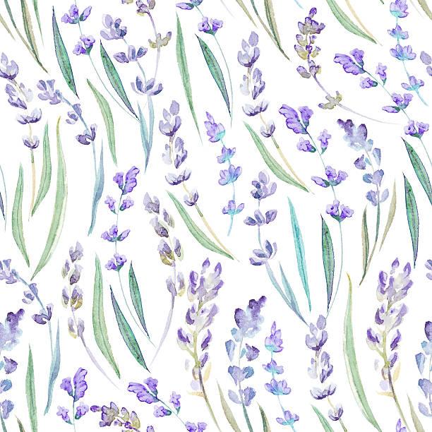 Watercolor lavender seamless pattern Botanical illustration. Watercolor lavender seamless pattern on white background. lavender color stock illustrations