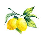istock watercolor lemon branch 1213896550