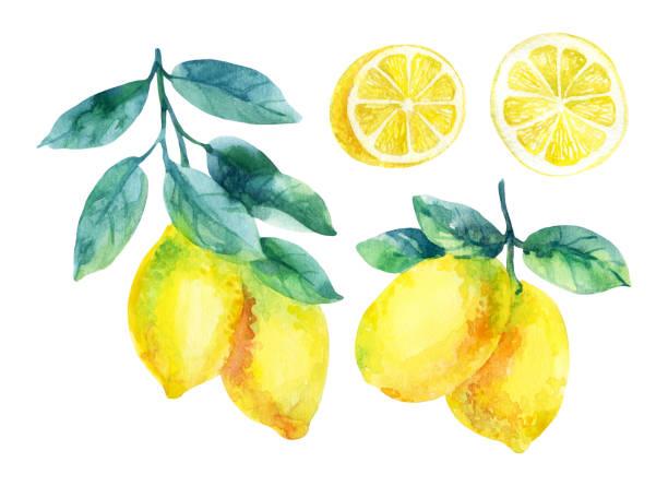 Limoni Disegno: Lemon Clip Art, Vector Images & Illustrations