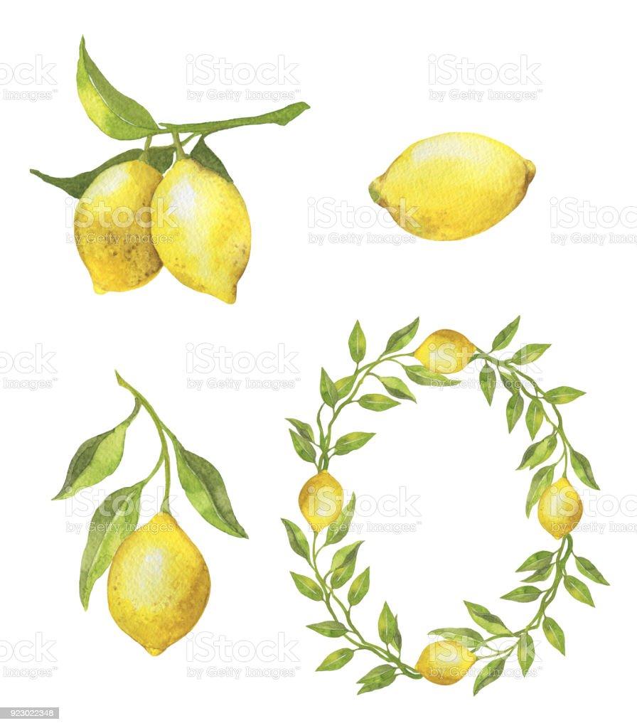 Sulu Boya Limon Celenk Gercekten Suluboya Resim Stok Vektor Sanati