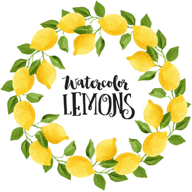 24 Hours Of Lemons >> Best Lemon Tree Illustrations, Royalty-Free Vector ...