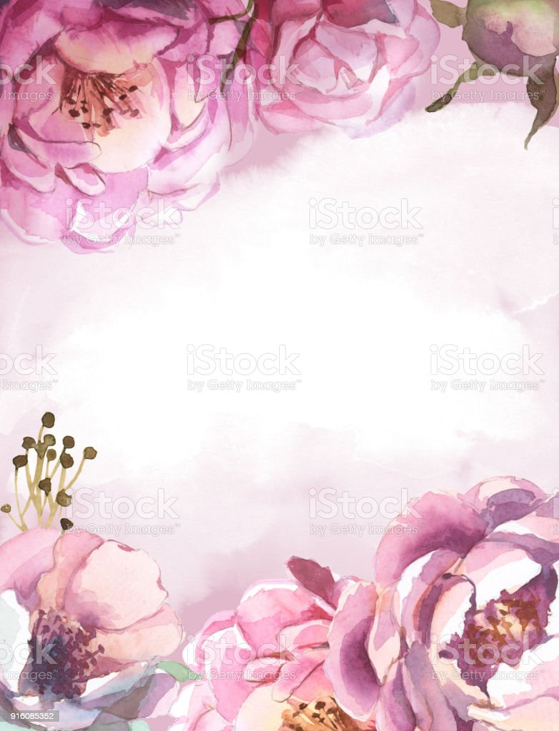 Watercolor Light Pink Rose Peonies With Gray Grass On Pink