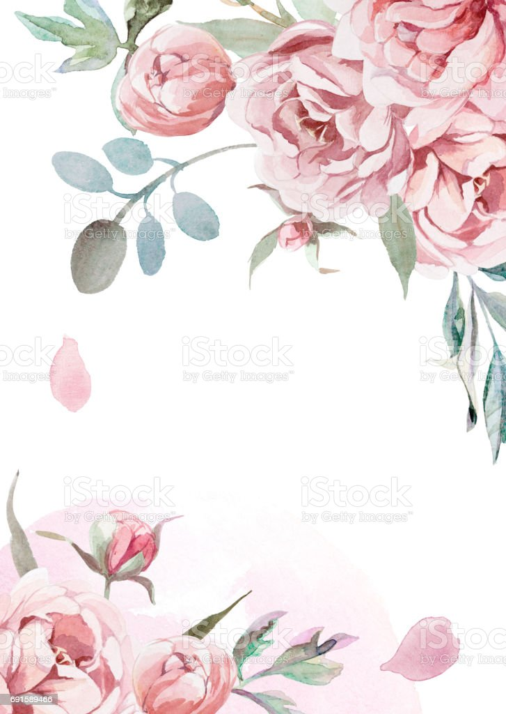 watercolor light pink, rose peonies with gray grass on white background for greetings card vector art illustration