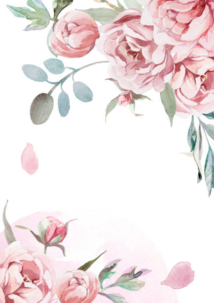 illustrazioni stock, clip art, cartoni animati e icone di tendenza di watercolor light pink, rose peonies with gray grass on white background for greetings card - sfondo matrimoni
