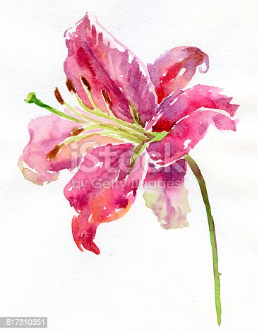 istock Watercolor lily 517310351
