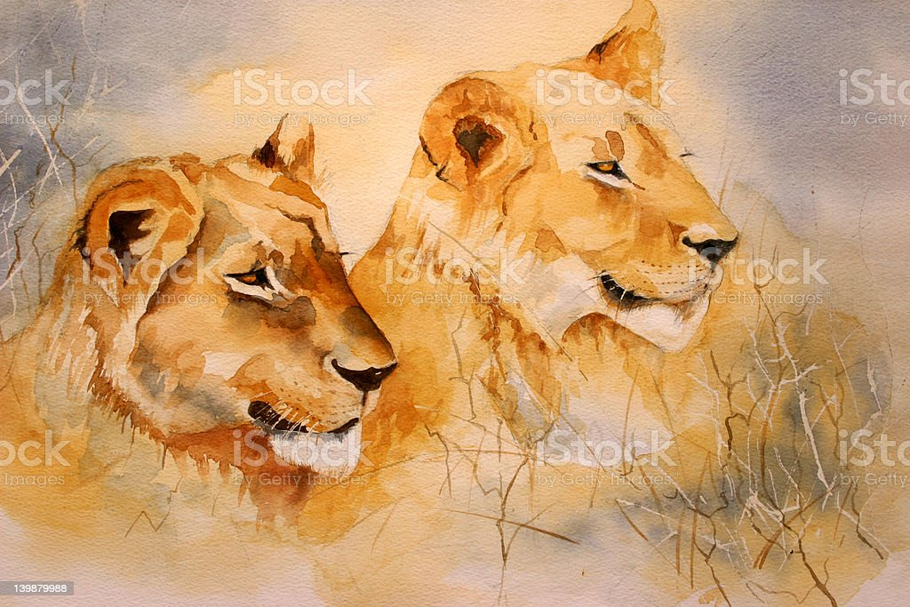 Watercolor: 'Lion stare' royalty-free stock vector art