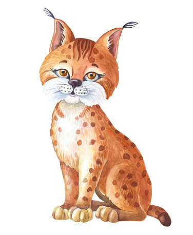 Watercolor Lynx on white background. Isolated of Bobcat. Cute cartoon character. Watercolour Illustration with red wild animal.