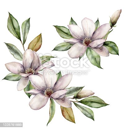 Watercolor magnolias and leaves set. Hand painted floral card. Bouquet with flowers isolated on white background. Spring illustration for design, print, fabric or background