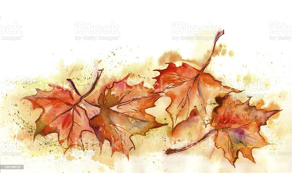 Watercolor -Maple Leaves- royalty-free stock vector art