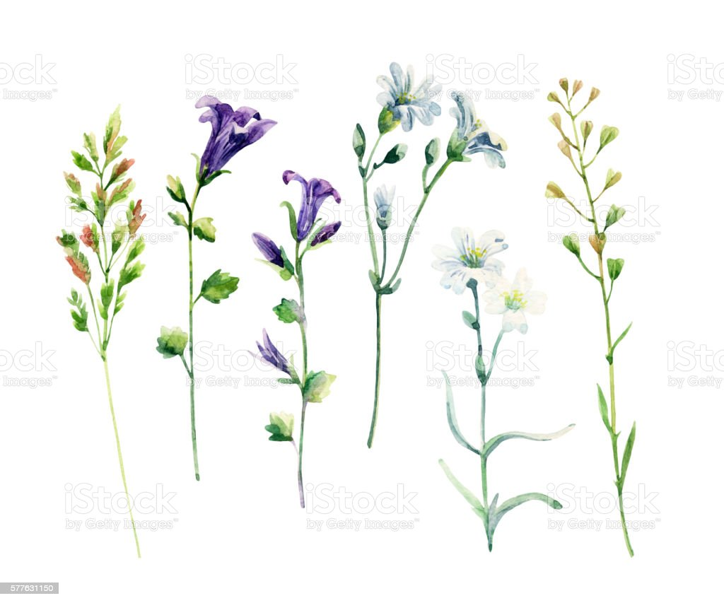 Watercolor meadow wild flowers set vector art illustration