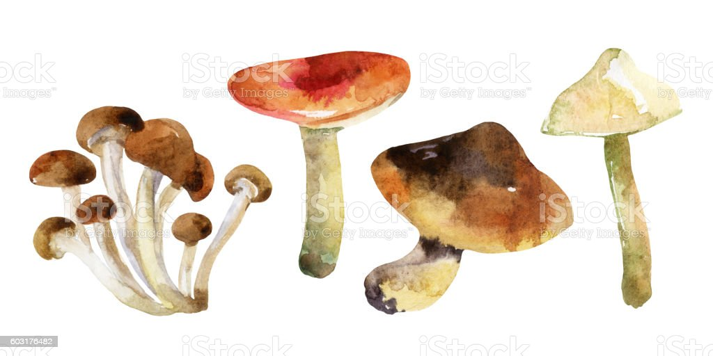 watercolor mushrooms set isolated on white background vector art illustration