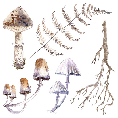 Watercolor mystical collection. Mushrooms, branches and plants.