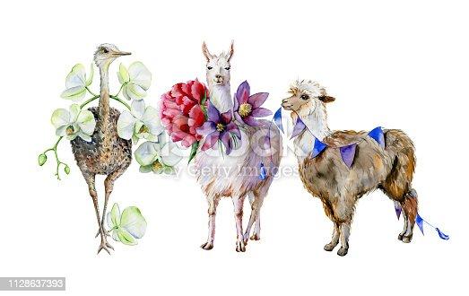 Watercolor of alpaca, cute llama and ostrich