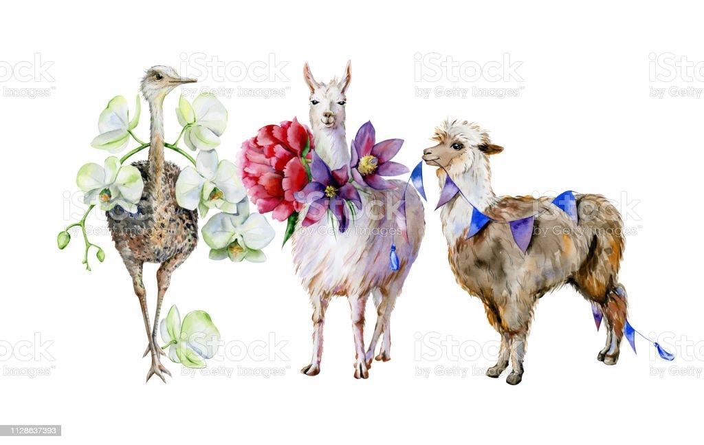 Aquarela de alpaca, lhama bonito e avestruz - ilustração de arte em vetor
