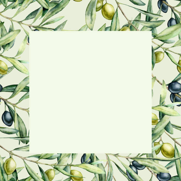 illustrazioni stock, clip art, cartoni animati e icone di tendenza di watercolor olive branch card. hand painted green and black olives on branch isolated on pastel background. floral botanical illustration for design, print. - verde cachi