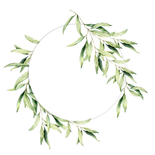 Watercolor olive leaves wreath. Hand painted floral circle border with olive tree branches with leaves isolated on white background. For design, print and fabric. Watercolor olive leaves wreath. Hand painted floral circle border with olive tree branches with leaves isolated on white background. For design, print and fabric olive branch stock illustrations