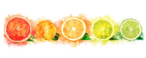 水彩のオレンジ、レモン、柑橘類、マンダリン、グレープ フルーツ、ライム - グレープフルーツ点のイラスト素材/クリップアート素材/マンガ素材/アイコン素材