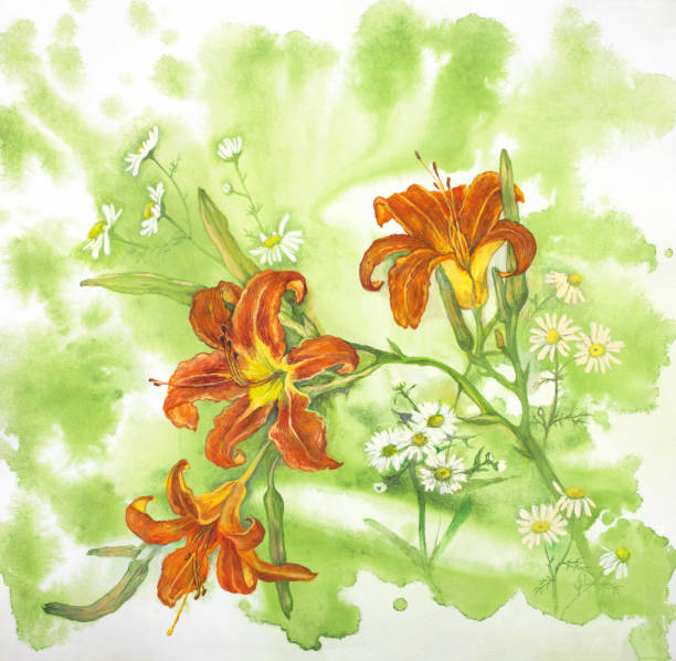 1cae601ed Watercolor orange lilies and white chamomiles vector art illustration