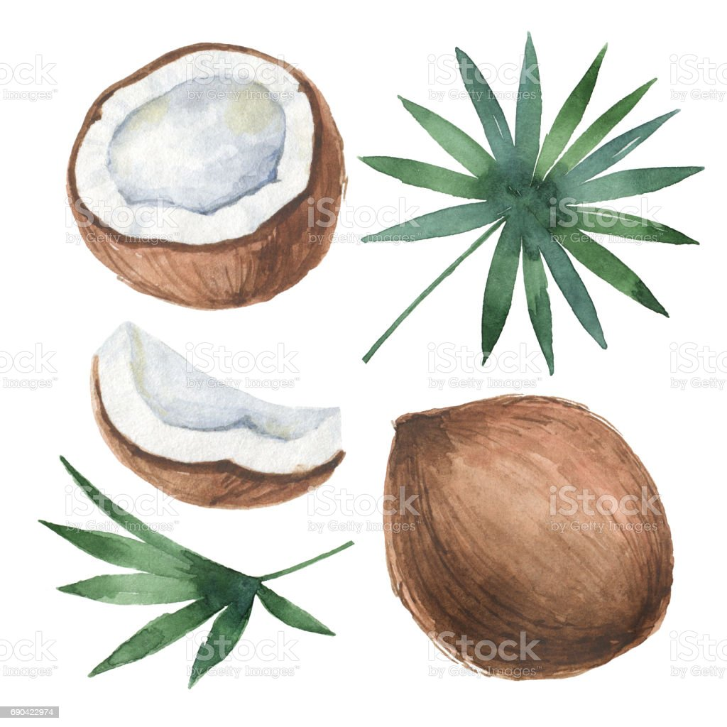 Watercolor organic set of coconut and palm trees isolated on white background. vector art illustration