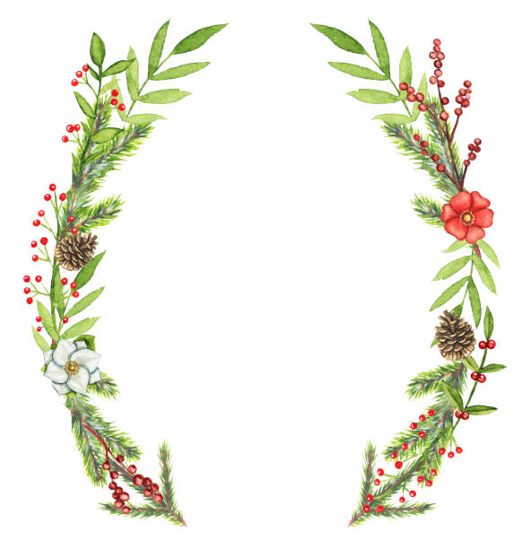 Watercolor oval frame with Christmas compositions Borders oval frame with Christmas branches, berries, cones, flowers and twigs isolated on white background. Watercolor hand drawn illustration australian christmas stock illustrations