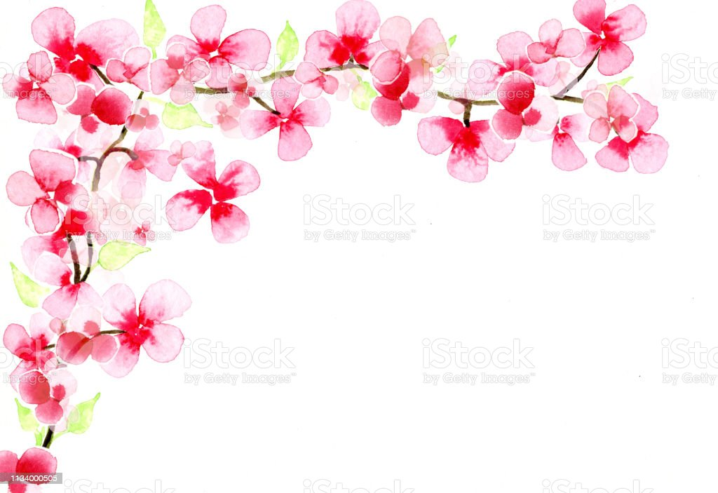 watercolor painted cherry blossoms, with copy-space vector art illustration