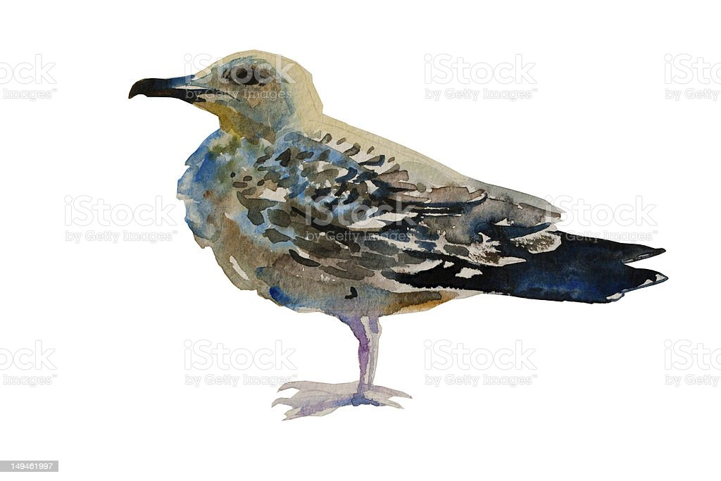 watercolor painted seagull vector art illustration