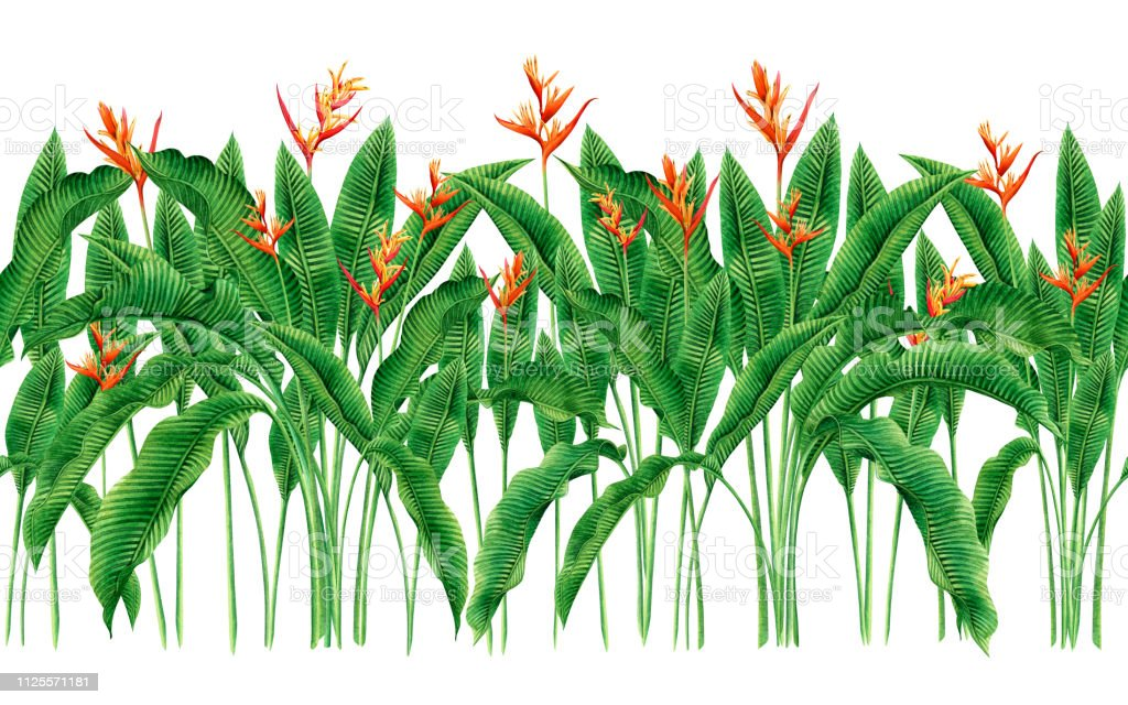 watercolor painting bird of paradise blooming flowers,green leaves,palm,banana seamless pattern on white background.Watercolor hand drawn illustration tree tropical exotic leaf for wallpaper textile. vector art illustration