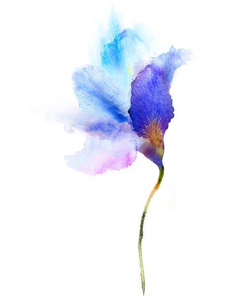 Watercolor painting blue iris Watercolor painting blue iris iris plant stock illustrations