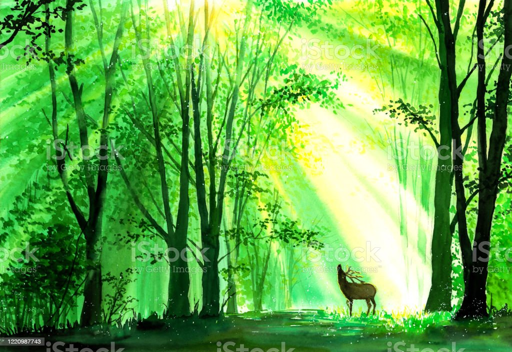 watercolor painting deer in forest stock illustration download image now istock watercolor painting deer in forest stock illustration download image now istock