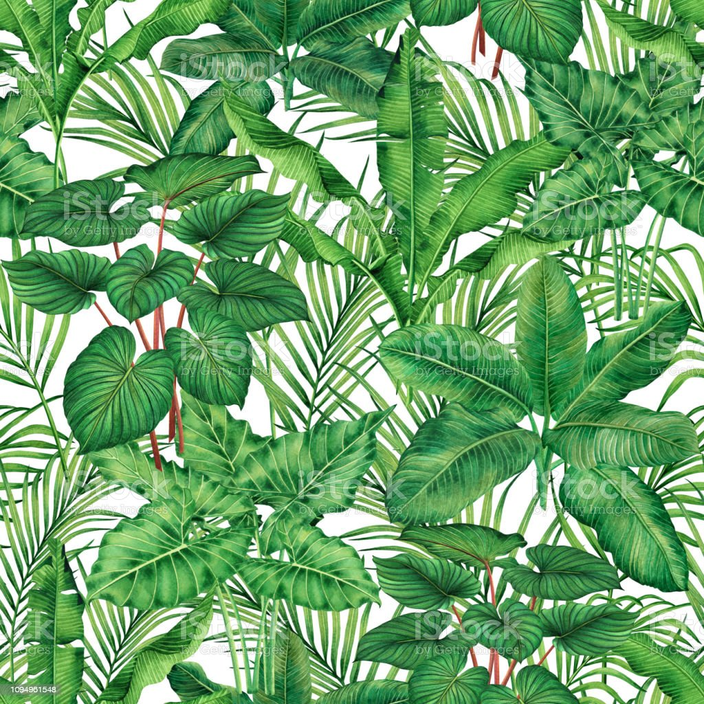 Watercolor painting green leaves,palm leaf isolated on white background.Watercolor hand drawn illustration tropical,aloha exotic leaf for wallpaper tree,jungle,forest Hawaii style pattern backdrop. vector art illustration