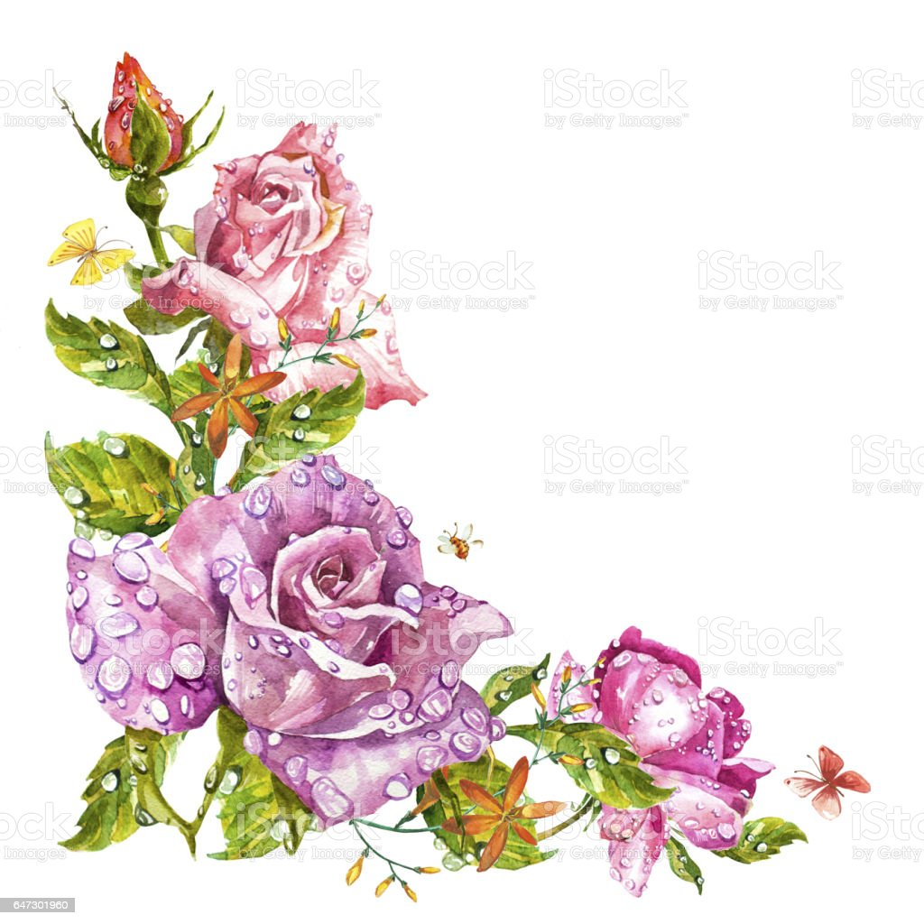 Watercolor painting greeting cards rose background watercolor watercolor painting greeting cards rose background watercolor composition flower backdrop isolated illustration kristyandbryce Images