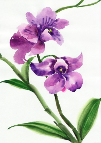 Watercolor original painting of purple orchids