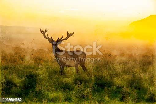 istock Watercolor painting of a stag deer with antlers standing in scenic nature in foggy morning or evening light 1198604587