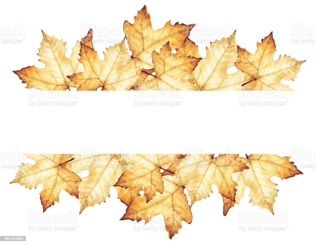 Watercolor painting of Autumn with place for text - maple leaves drawing. vector art illustration