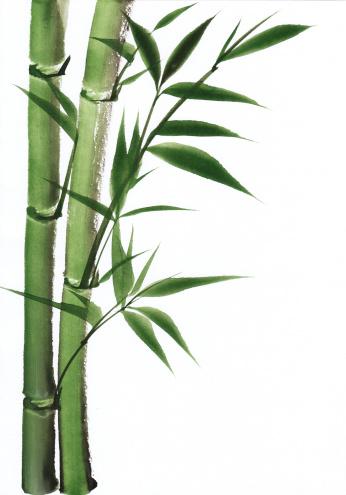Bamboo Illustration Drawing