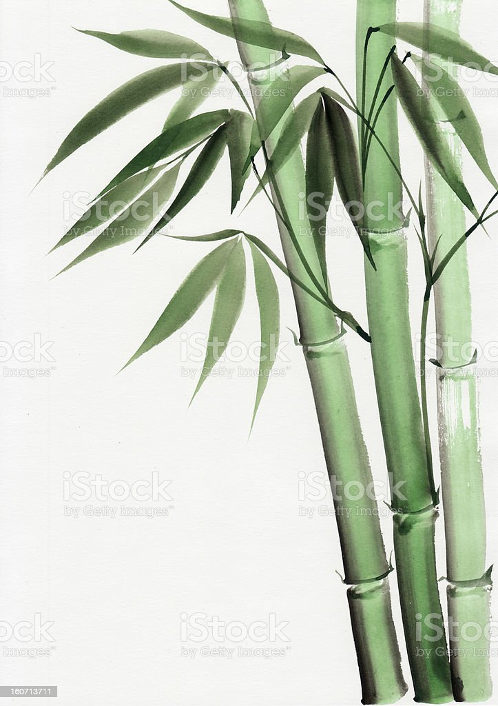 Watercolor painting of bamboo royalty-free watercolor painting of bamboo stock vector art & more images of art