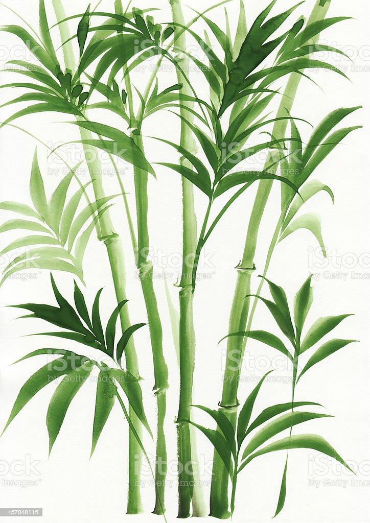 Watercolor painting of palm bamboo vector art illustration