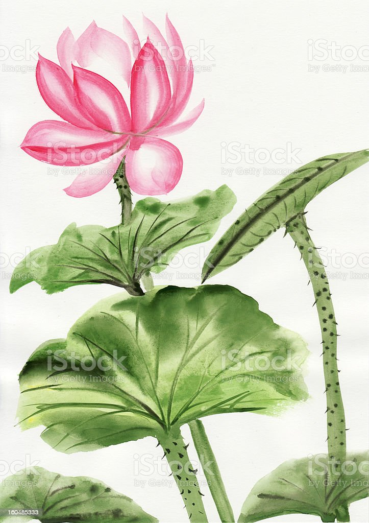 Watercolor painting of pink lotus flower royalty-free stock vector art
