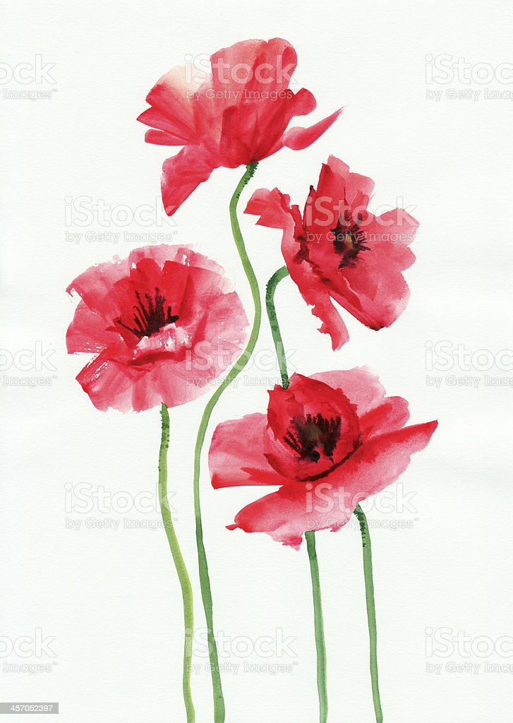 Watercolor painting of red poppies vector art illustration