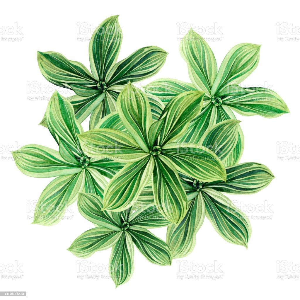 Suluboya Palmiye Yapragi Yesil Hindistan Cevizi Yapraklari Beyaz