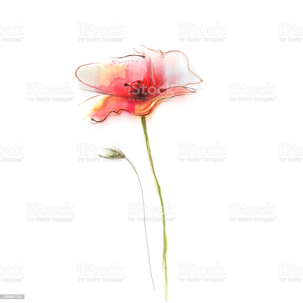 Watercolor painting poppy flower isolated flowers on white watercolor painting poppy flower isolated flowers on white background royalty free watercolor painting poppy mightylinksfo