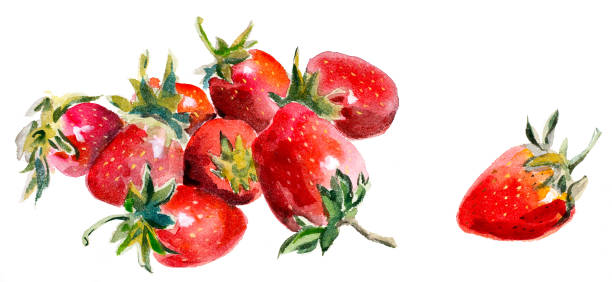 Watercolor painting strawberry vector art illustration
