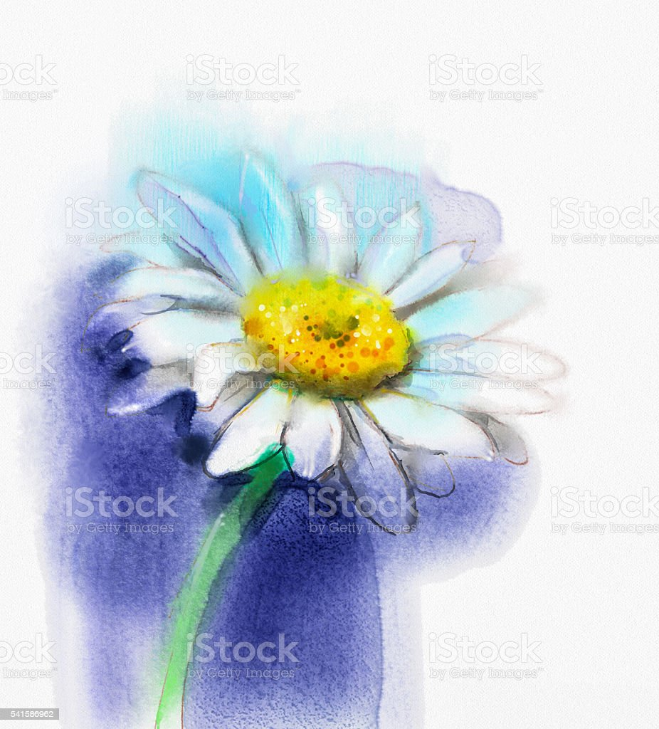 Watercolor Painting White Gerbera Daisy Flower Stock Vector Art
